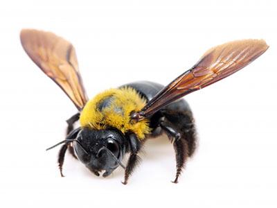 このハチ刺すの??