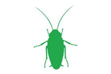 嫌われ者No.1『ゴキブリ』~身近で見られるゴキブリ~