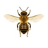ニューヨークの街中に大量のミツバチ出現